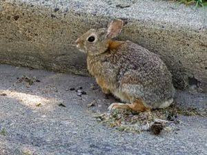 bunniesareback