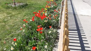 poppy fence